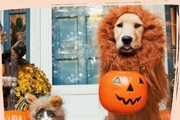 These Animals Are Celebrating Halloween Better Than you