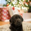 Christmas Puppy