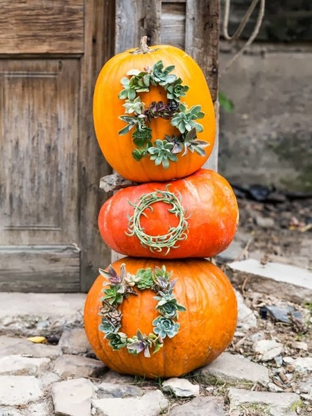 Succulent Word Pumpkin