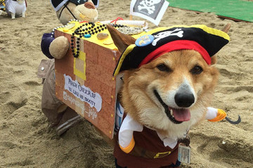 Cuteness Overload: This is What a Corgi Beach Party Looks Like
