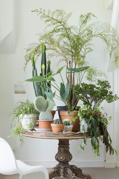 Tabletop jungle indoor plant ideas that 39 ll instantly - Vase de decoration interieur ...