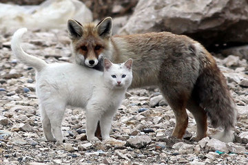Animal Odd Couples That Prove We Really Can All Get Along
