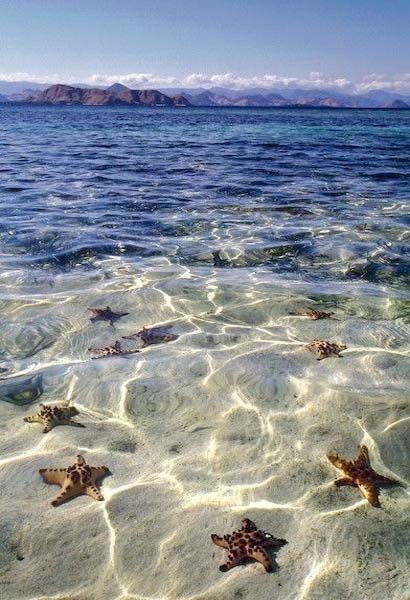 Starfish Beach, Grand Cayman Islands