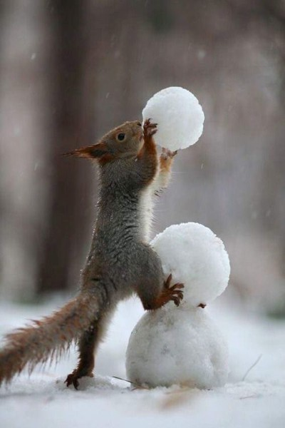Snowman-Building Squirrel
