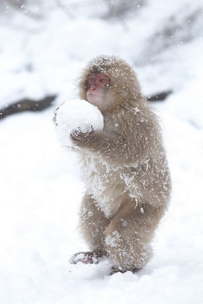 Baby's First Snowball