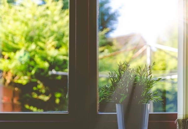 Create a Happier, Healthier Living Space with These Indoor Plants
