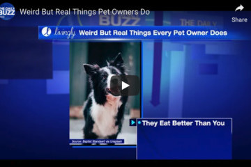 Weird But Real Things All Pet Owners Do