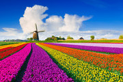 Find Your Escape In These Romantic and Enchanting Flower Fields