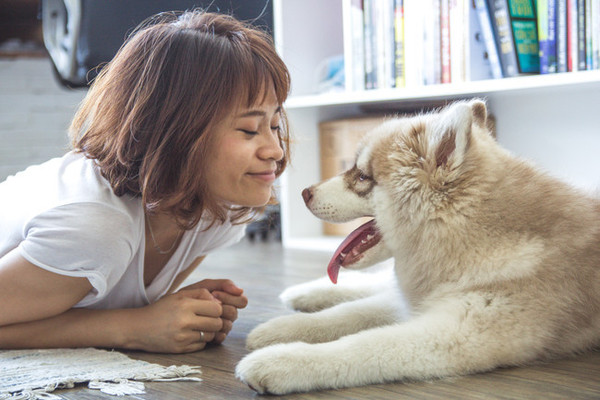 Helpful Hacks All Pet Owners Should Know