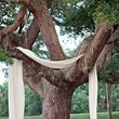 A Simple Draped Tree