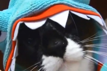 Watch a Cat in a Shark Suit on a Roomba Chase a Duck [VIDEO]