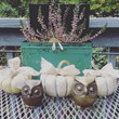 Mini Pumpkins with Bows