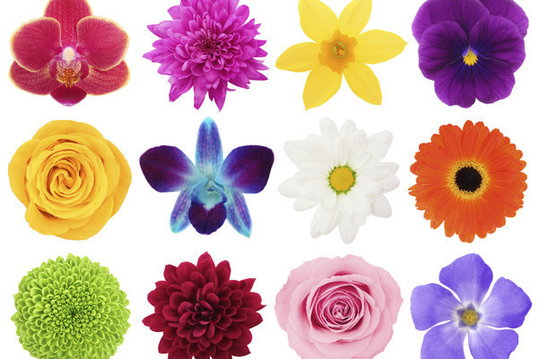 How Many Different Kinds Of Flowers Can You Name Trivia Quiz